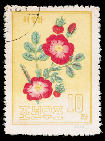 chinese postage stamp: NORTH KOREA - CIRCA 1963: A postage stamp printed in North Korea shows a Chinese peony, Paeonia lactiflora, circa 1963
