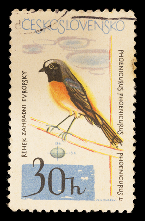 affinity: CZECHOSLOVAKIA - CIRCA 1964: A postage stamp printed in Czechoslovakia shows a common redstart, Phoenicurus phoenicurus, an european flycatcher with affinity with the robin, circa 1964