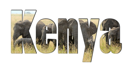 safari game drive: A herd of african elephants behind the word Kenya isolated on a white background. Elephants are one of the symbols of the african safari Stock Photo
