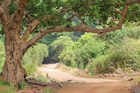 endless road: Endless road in the forest of Lake Manyara National park in Tanzania