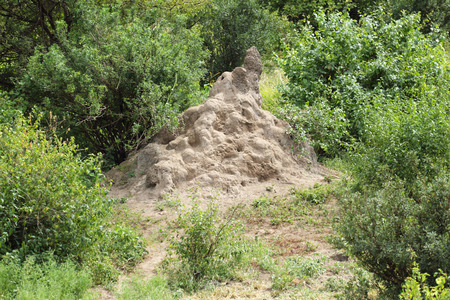 anthill: View on termites anthill in sunny forest Stock Photo