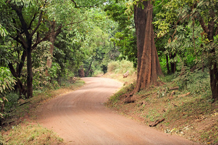 endless road: Endless road in forest of Lake Manyara National park in Tanzania.