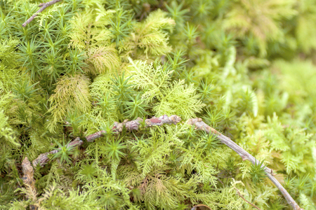 underwood: Close-up view of green moss in the underwood