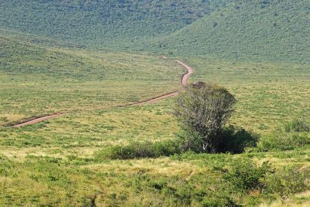 endless road: Endless road surrounded by green land. Serengeti National Park Tanzania