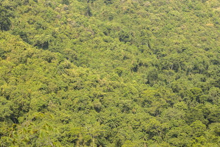 luxuriant: View on the luxuriant wild forest of Gombe Conservation Area, Tanzania