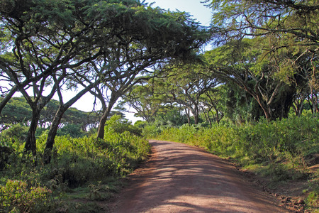 Road along the rim in the forest of Ngorongoro Conservation Area, Tanzania