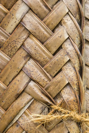 interweaving: Close-up of brown ripe palm leaves in wattled pattern. This interweaving technique is used to make roofs in east africa