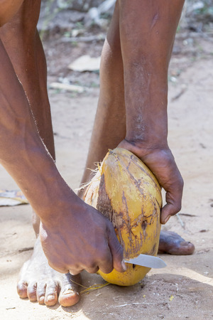 extracted: Unrecognizable man peeling a ripe coconut by removing the external coat and fibers that wrap the hard shell of the fruit. From such fibers is extracted the coir