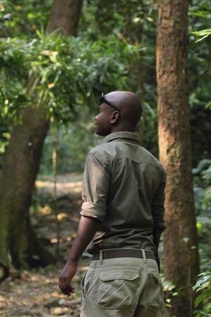 chimpances: PARQUE NACIONAL Gombe Stream, Tanzania - 14 de junio: un guarda en el bosque de Gombe es el seguimiento de los chimpancés el 14 de junio de 2013 en el Parque Nacional de Gombe Stream. Gombe es el parque nacional más pequeño en Tanzania