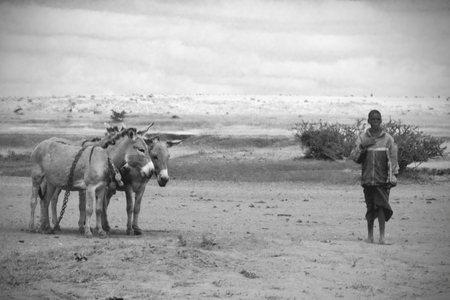 wasteland: ARUSHA, TANZANIA - JUNE 06: A man standing in the wasteland near a couple of donkeys on June 06, 2013 in Arusha. Donkeys play a vital role in rural economies and are used for transport Editorial