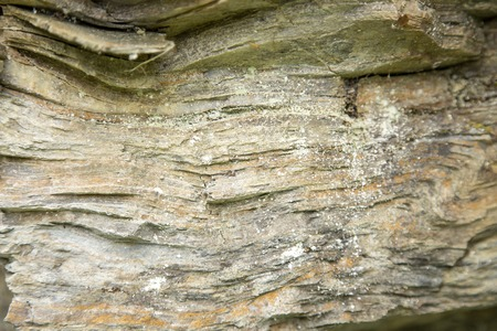 stratified: Stratified rock surface texture similar to a tree bark background