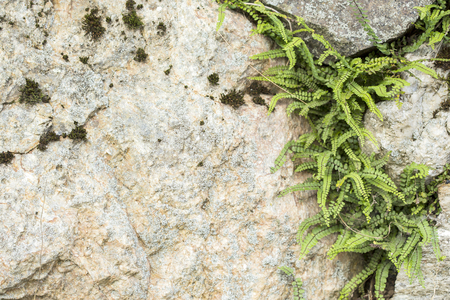 tenacious: View on bright plant growing from stone wall