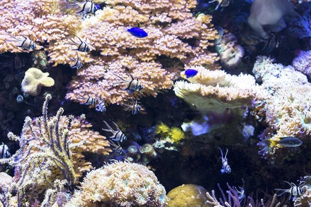 sea grass: Several fishes swimming between sea grass and corals