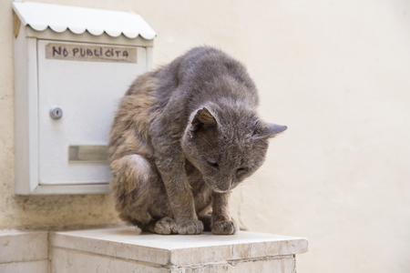 mangy: Close-up of grey cat sitting near letterbox with words no publicita