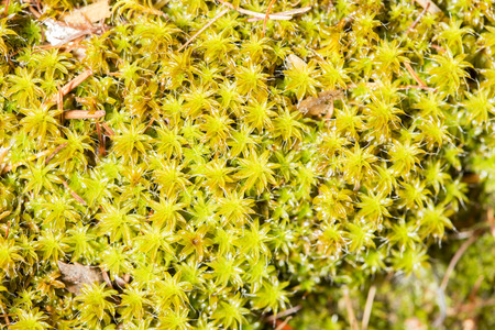 underwood: Extreme closeup of green moss growing in the underwood