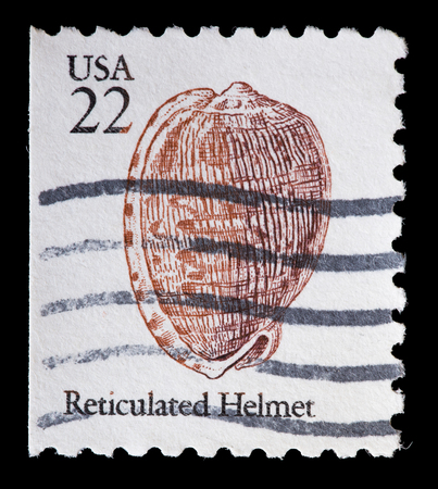 reticulated: UNITED STATES OF AMERICA - CIRCA 1985: A used postage stamp printed in United States shows the shell of a reticulated cowry helmet sea snail, Cypraecassis testiculus, circa 1985