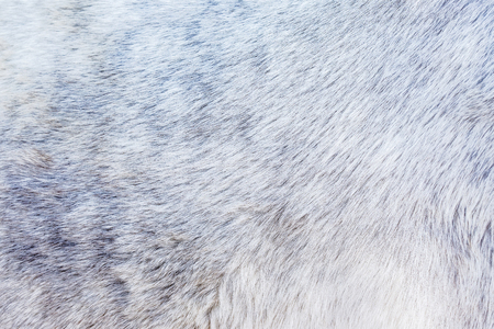 Background of the grey fur of a horse
