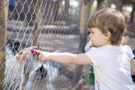 fingering: Cute little girl pointing at a hen behind the net of a chicken coop Stock Photo