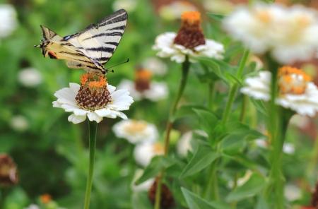 bella farfalla SI avvicina fiori colorati