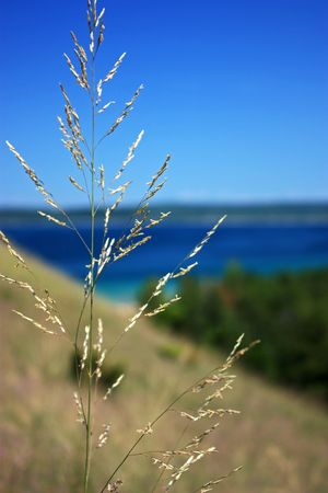 Close up of dunegrass against Lake Michigan.