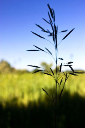 Field grass in rural Michigan during the summer. Stock Photo