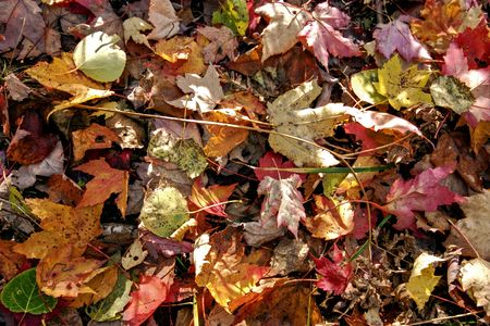 Colorful confetti of autumn leaves on the ground.