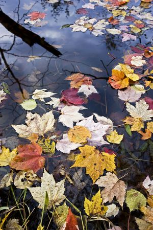 Colofrul confetti of autumn leaves in water.
