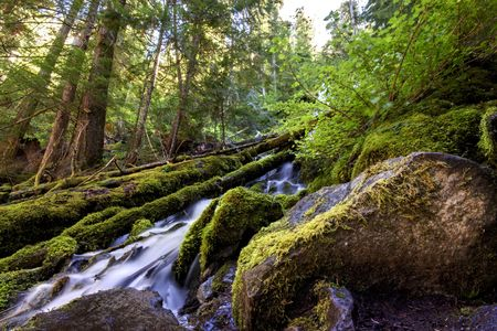 proxy falls: Rocks and trees surround Upper Proxy falls in Oregon.