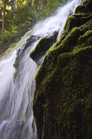 proxy falls: Gushing water of Proxy Falls in oregon Stock Photo