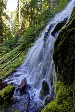 proxy falls: Lower Proxy Falls flows in central Oregon