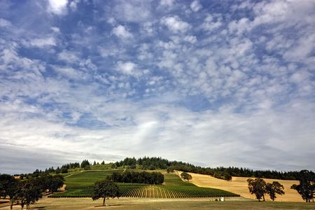 A Vineyard view within Oregons Willamette Valley Stok Fotoğraf