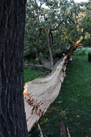 이 나무는 악의적 인 뇌우의 희생자였습니다.