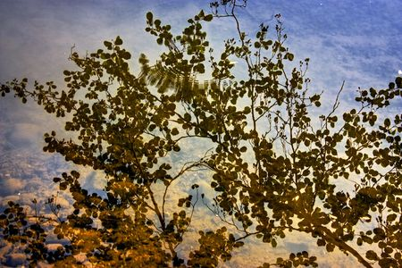 Reflections of a tree in the water of the Huron River in Michigan