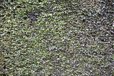 hedge: Textured background - Hedge
