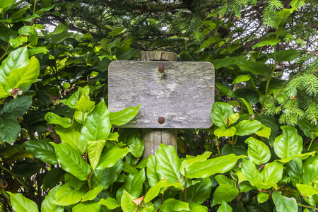 Blank Old wooden signpost surrounded by vegetation. Mockup and ads concept.