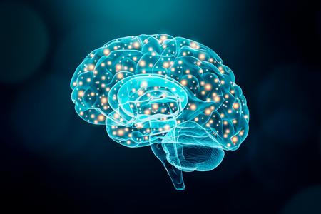 Ludzki mózg. Koncepcja aktywności mózgu lub neuronów. Nauka, poznanie, psychologia, pamięć, nauka konceptualnej ilustracji.