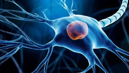 Closeup of a neuron or nerve cell soma with nucleus, myelin and dendrites 3D rendering illustration on a blue background. Neuroscience, microbiology, anatomy, medicine, nervous system concepts.