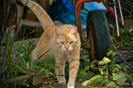 sneaking: sneaking cat Stock Photo