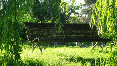 Overgrown Park Bench Stock Photo
