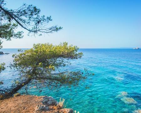 mediterranea: Crustal clear water in sea with mediterranea tree