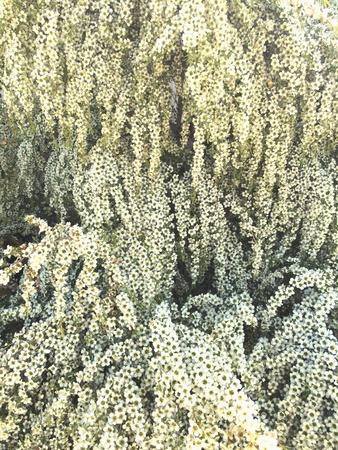 at white: White tree Stock Photo