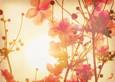 vintage power: anemone japonica Stock Photo