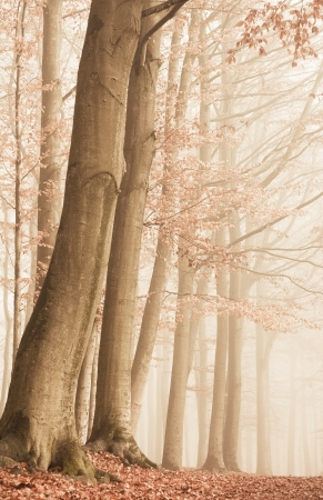 foggy forest in fall