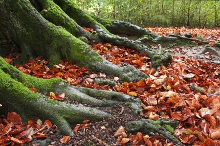Waldboden Lizenzfreie Bilder