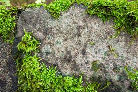 Moos auf Stein Hintergrund