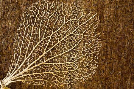Macro shot of a leaf skeleton on a wooden board