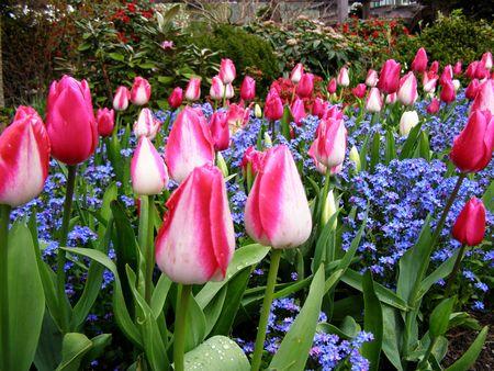 Primavera in Canada  Archivio Fotografico