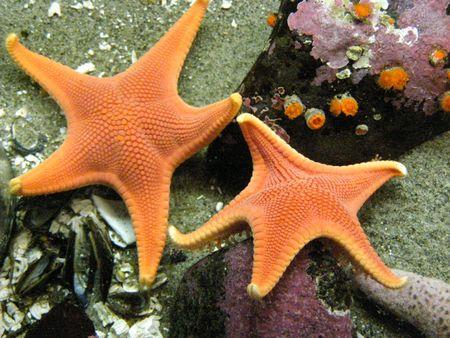 fish star: Star Fish