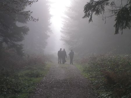 dean lake: Lost in the Mist, Forest of Dean