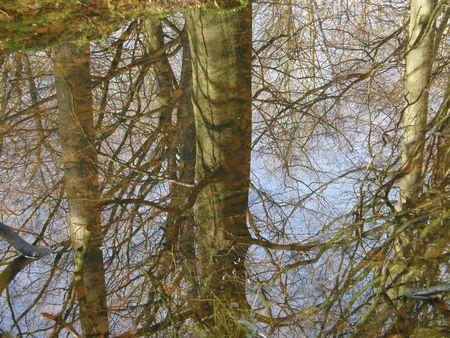 dean lake: Reflection